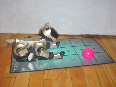 Aibo at the start of a game